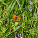 EnviroPlanning biolog sökes